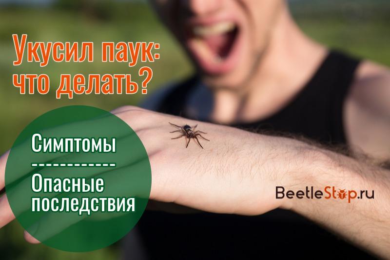 Укусил паук