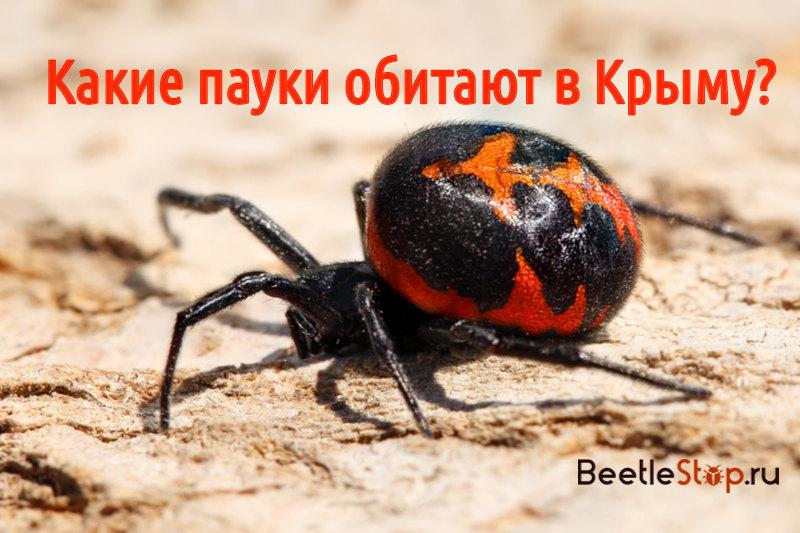Пауки Крыма