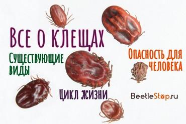 Чем питаются клещи в природе