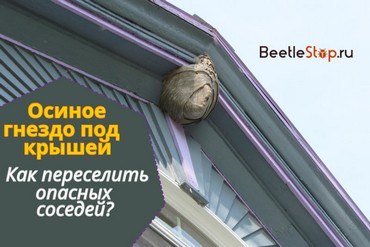 Как вывести ос из-под крыши дома?