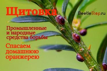 Инсектициды от щитовки для комнатных растений