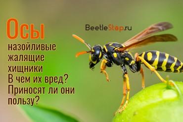 Роль осы в природе