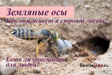 Укус земляной осы что делать