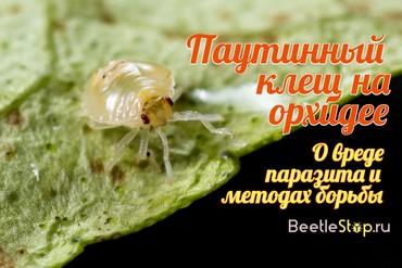 Паутинный клещ мучнистый червец трипсы