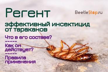 Как развести регент от тараканов