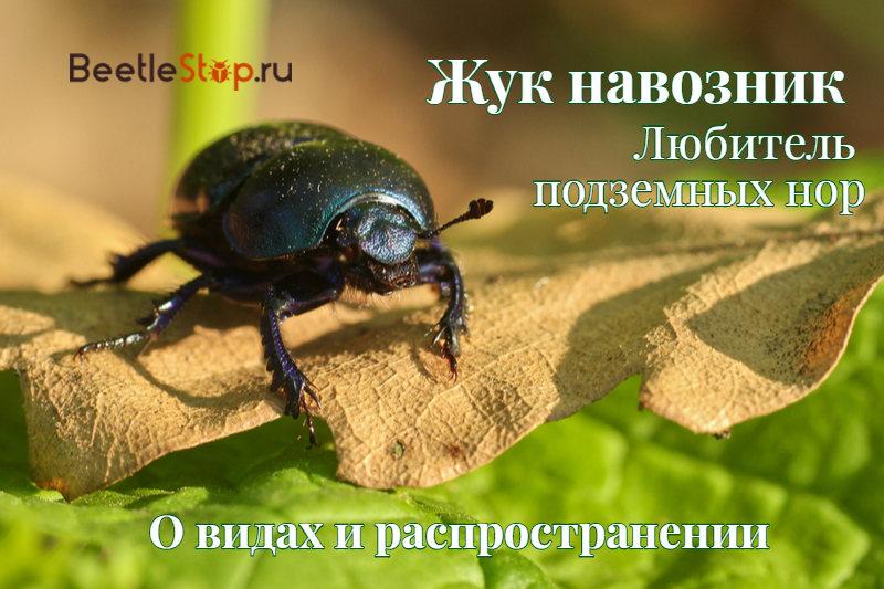 Живет на даче жук навозник - Издательский дом ВИКО ПЛЮС