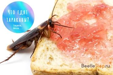 Что любят тараканы