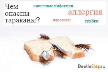 Чем можно заразиться от тараканов