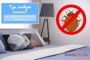 Где и как живут постельные клопы?