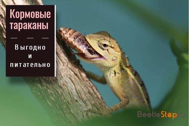 Террариум для тараканов купить - insecta