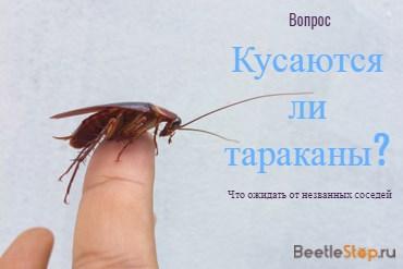 Кусаются ли домашние тараканы?